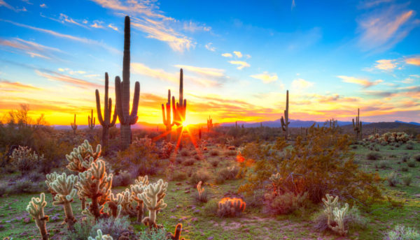Sunrise over the desert. Cacti in the foreground