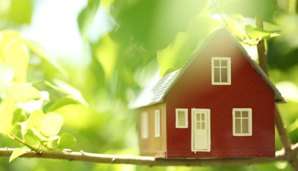 small wooden red house sitting in tree branches