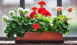 flower-shutterstock-crop_288740153.jpg