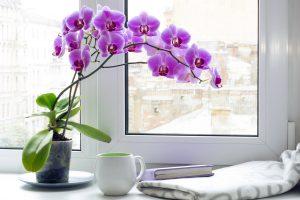 orchid-shutterstock_491195248.jpg