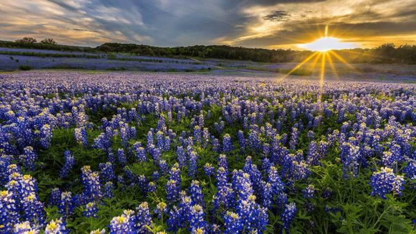 Floral field during sunrise