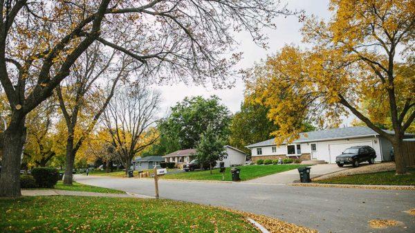 Tree lined suburban neighborhood